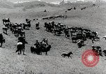 Image of farm activities Kazakhstan Soviet Union, 1943, second 9 stock footage video 65675067478