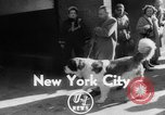 Image of Westminster Kennel Club Dog Show New York United States, 1953, second 2 stock footage video 65675067643