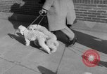 Image of Westminster Kennel Club Dog Show New York United States USA, 1953, second 6 stock footage video 65675067643