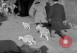 Image of Westminster Kennel Club Dog Show New York United States, 1953, second 9 stock footage video 65675067643