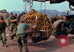 Image of Elephant airlifted Vietnam, 1968, second 9 stock footage video 65675067651