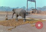 Image of Elephant airlifted Vietnam, 1968, second 6 stock footage video 65675067652