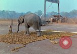 Image of Elephant airlifted Vietnam, 1968, second 7 stock footage video 65675067652