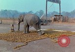 Image of Elephant airlifted Vietnam, 1968, second 8 stock footage video 65675067652