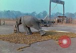 Image of Elephant airlifted Vietnam, 1968, second 9 stock footage video 65675067652