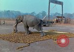 Image of Elephant airlifted Vietnam, 1968, second 10 stock footage video 65675067652