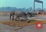 Image of Elephant airlifted Vietnam, 1968, second 11 stock footage video 65675067652