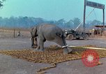 Image of Elephant airlifted Vietnam, 1968, second 12 stock footage video 65675067652