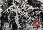 Image of gardens in Kingston Kingston Jamaica, 1936, second 5 stock footage video 65675067698