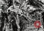 Image of gardens in Kingston Kingston Jamaica, 1936, second 6 stock footage video 65675067698