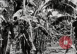Image of gardens in Kingston Kingston Jamaica, 1936, second 7 stock footage video 65675067698