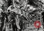 Image of gardens in Kingston Kingston Jamaica, 1936, second 8 stock footage video 65675067698