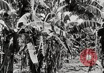 Image of gardens in Kingston Kingston Jamaica, 1936, second 9 stock footage video 65675067698
