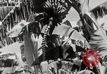 Image of gardens in Kingston Kingston Jamaica, 1936, second 12 stock footage video 65675067698