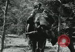 Image of farm activities India, 1961, second 5 stock footage video 65675067723