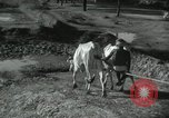 Image of Farm activities India, 1961, second 6 stock footage video 65675067724