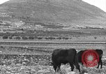 Image of Mount Tabor Palestine, 1936, second 5 stock footage video 65675067740