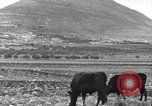 Image of Mount Tabor Palestine, 1936, second 6 stock footage video 65675067740