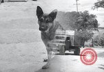 Image of war dogs United States USA, 1944, second 1 stock footage video 65675067777