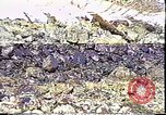 Image of Exxon Valdez oil spill Valdez Alaska USA, 1989, second 10 stock footage video 65675067946