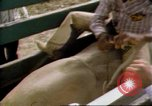Image of Bull riding United States USA, 1984, second 5 stock footage video 65675068151