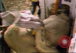Image of Bull riding United States USA, 1984, second 10 stock footage video 65675068151