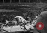 Image of Burial for Wöbbelin Camp victims Ludwigslust Germany, 1945, second 8 stock footage video 65675068334