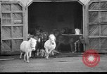 Image of Tierpark Hagenbeck zoo Hamburg Germany, 1945, second 10 stock footage video 65675068493