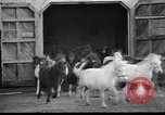 Image of Tierpark Hagenbeck zoo Hamburg Germany, 1945, second 11 stock footage video 65675068493