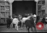 Image of Tierpark Hagenbeck zoo Hamburg Germany, 1945, second 12 stock footage video 65675068493