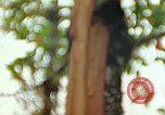 Image of flora Guatemala, 1946, second 7 stock footage video 65675068502