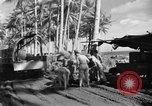 Image of 8th Fighter Group Morotai Island Indonesia, 1944, second 2 stock footage video 65675068814