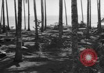 Image of 8th Fighter Group Leyte Philippines, 1944, second 6 stock footage video 65675068918
