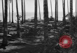 Image of 8th Fighter Group Leyte Philippines, 1944, second 8 stock footage video 65675068918