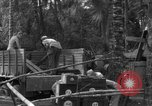Image of 8th Fighter Group Morotai Island Indonesia, 1944, second 12 stock footage video 65675068919