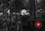 Image of 8th Fighter Group Morotai Island Indonesia, 1944, second 11 stock footage video 65675068922