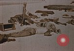 Image of Fallen United States Marines at Betio Tarawa Tarawa Gilbert Islands, 1943, second 8 stock footage video 65675069063