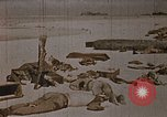 Image of Fallen United States Marines at Betio Tarawa Tarawa Gilbert Islands, 1943, second 11 stock footage video 65675069063