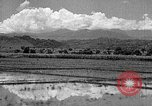Image of lumber yard Formosa Taiwan, 1945, second 11 stock footage video 65675069166