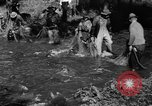 Image of salmon fish Tanner Creek Oregon USA, 1937, second 12 stock footage video 65675069215