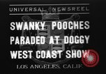 Image of National Winter dog show Los Angeles California USA, 1937, second 1 stock footage video 65675069217