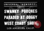 Image of National Winter dog show Los Angeles California USA, 1937, second 3 stock footage video 65675069217