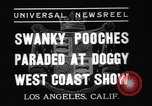 Image of National Winter dog show Los Angeles California USA, 1937, second 4 stock footage video 65675069217