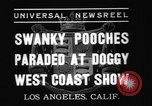 Image of National Winter dog show Los Angeles California USA, 1937, second 7 stock footage video 65675069217