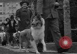 Image of National Winter dog show Los Angeles California USA, 1937, second 12 stock footage video 65675069217