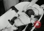Image of baby gorilla Anacortes Washington USA, 1951, second 10 stock footage video 65675069469