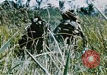 Image of jungle combat with machine guns Vietnam, 1967, second 3 stock footage video 65675069514