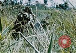 Image of jungle combat with machine guns Vietnam, 1967, second 5 stock footage video 65675069514