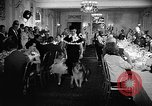 Image of a collie Chicago Illinois USA, 1957, second 7 stock footage video 65675069546