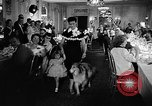 Image of a collie Chicago Illinois USA, 1957, second 8 stock footage video 65675069546